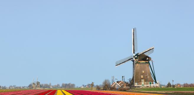Pola tulipanów, Holandia
