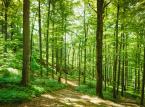 Naukowcy: Trzeba chronić Puszczę Białowieską. Kornik jej nie zagraża