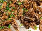 Jadalne owady to nie tylko dobry biznes, ale i szansa dla środowiska
