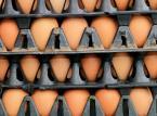 KE chce spotkania państw członkowskich UE w sprawie skandalu z jajami