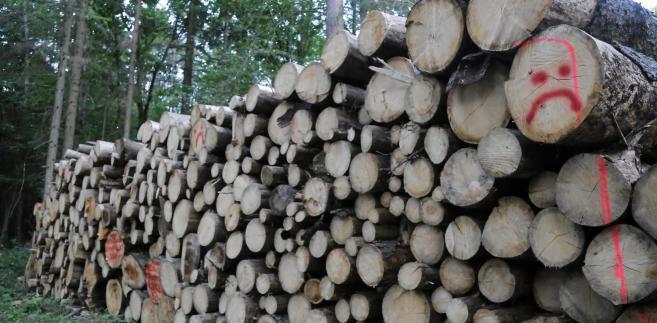 """""""Ministerstwo Środowiska i Lasy Państwowe realizują w Puszczy Białowieskiej działania mające na celu zapewnienie bezpieczeństwa publicznego i ochronę zagrożonych gatunków i siedlisk, co jest zgodne z postanowienie wiceprezesa TSUE z 27 lipca"""" - powiedział Brzózka. """"To są jedyne działania, które prowadzimy"""" - dodał."""