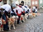 <b>10 stycznia – Finał Wielkiej Orkiestry Świątecznej Pomocy już po raz 24.</b> <br> <br> Właściciele psów rasy golden retriever kwestowali ze swoimi czworonogami na Starym Rynku w Poznaniu, na rzecz Wielkiej Orkiestry Świątecznej Pomocy