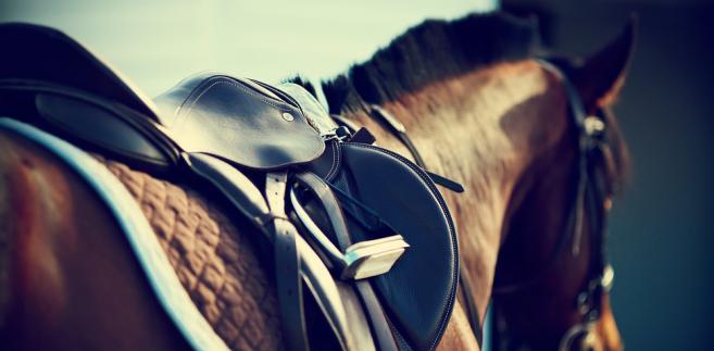 Minister rolnictwa ma nowego pełnomocnika ds. hodowli koni