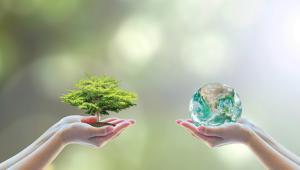 Spółka będzie też mogła m.in. pozyskiwać grunty, przeprowadzać remonty czy rozwijać technologie w dziedzinie przetwarzania drewna