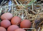 Polskie jaja z dobrą opinią za granicą. Producenci ratują się eksportem