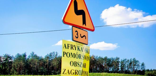 Zasadność odstrzału dzika w walce z afrykańskim pomorem świń wzbudza sprzeciw nawet wśród samych myśliwych i Polskiego Związku Łowieckiego. Takie działanie nie powstrzyma choroby.