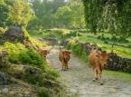 """<strong>Park Narodowy Peneda-Gerês</strong> <br></br> Jeśli udamy się na północny wschód od Porto, dotrzemy do kolejnego magicznego zakątka Portugalii. Góry Serra da Peneda-Gerês to najbardziej wysunięty na północ obszar kraju. Na ich terenie znajduje się Park Narodowy Peneda-Gerês – rozciąga się od płaskowyżu Castro Laboreiro do płaskowyżu Mourela, obejmując pasma górskie Penedy, Soajo, Amarela i Gerês.  <br></br> – Park został ustanowiony dekretem w 1971 roku, w celu wzmocnienia i zachowania tutejszej przyrody dla celów edukacyjnych, naukowych i turystycznych. Działania ochronne przyniosły zamierzony rezultat, bowiem różnorodność biologiczna chronionego obszaru ma się dziś wyjątkowo dobrze. Co więcej można odwiedzać go przez cały rok – wyjaśnia przedstawiciel Rainbow. <br></br> Zwykły spacer po lesie Ramiscal, Albergaria, Cabril to naprawdę niepowtarzalne przeżycie, Przy odrobinie szczęścia można wypatrzeć orła przedniego lub chochoła pirenejskiego, ale wystarczy, jeżeli  skupimy się na krajobrazie. Podróżnych zachwycą też wodospady, które opadają kaskadowo, tworząc szereg naturalnych górskich basenów – znajdziemy je w pobliżu wioski Froufe. Można też wybrać jeden ze szlaków, prowadzących do pozostałości wspaniałych zamków, jak Castro Laboreiro i Lindoso, a także Mosteiro de Ermelo – XII-wieczny klasztor benedyktyński wybudowany na brzegu rzeki. Dzikie pomarańcze z okolicznych drzew są uważane za najsłodsze w Portugalii. Na terenie parku znajduje się również wspaniale zachowana rzymska droga, która kiedyś była używana przez legionistów, aby pokonać trasę z Bragi do Astorgi. <br></br> <a  href=""""https://r.pl/portugalia"""" title=""""r.pl/portugalia""""><font color=""""#C9C9C9""""> Źródło: r.pl/portugalia >>></font></a>"""